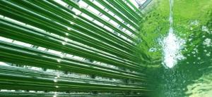 glass%20tubes%20organic-chlorella-tablets.jpg